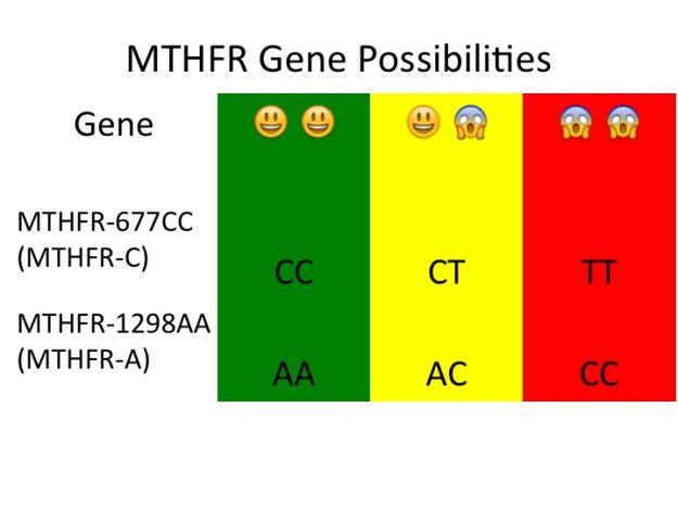 MTHFR Gene Possibilities