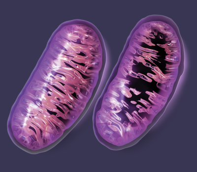 Danni-collaterali-ai-mitocondri