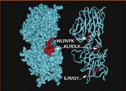 Mimeticità molecolare